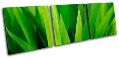 Grass Shoots Floral - 13-1387(00B)-TR31-LO